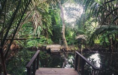 Dżungla w Mieście! Bang Kachao jako Zielone Płuca Bangkoku