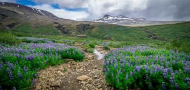 Wodospad Glymur Islandia (1)